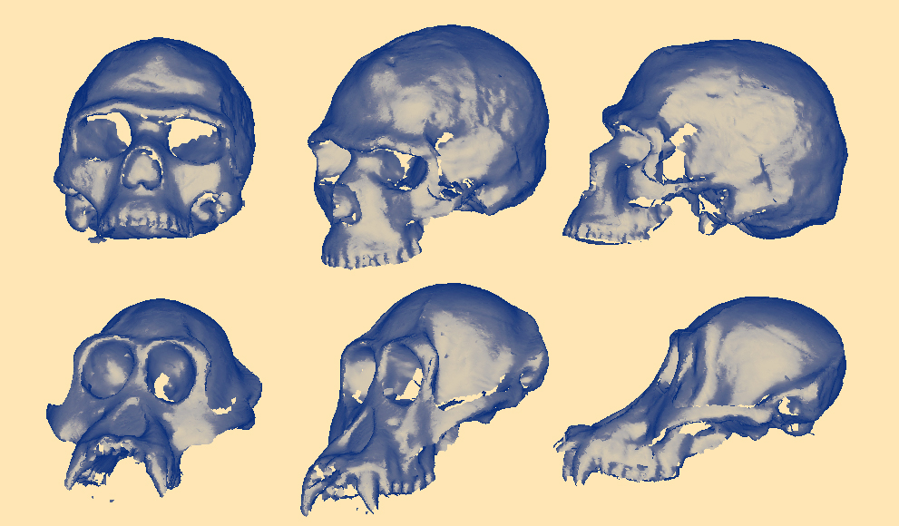 WellesleyX class now offers a virtual 3D fossil library.