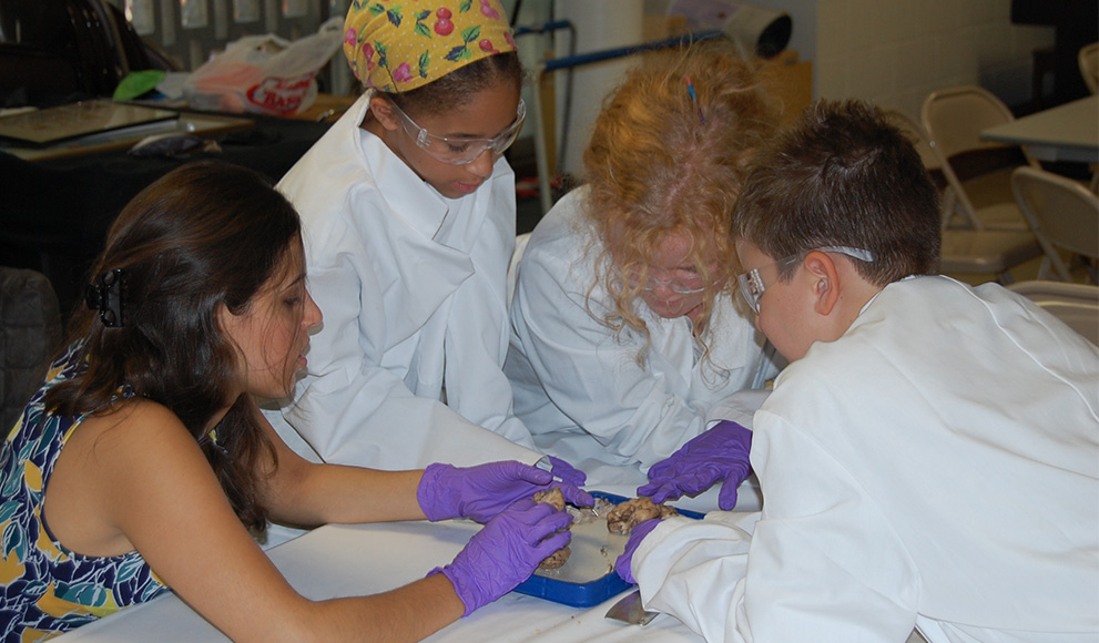 Wellesley neuroscience students lead middle schoolers in a dissection.