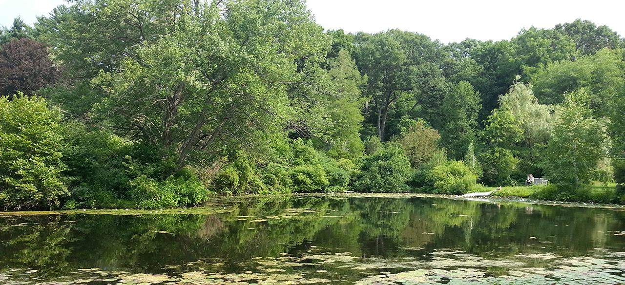 Wellesley landscape