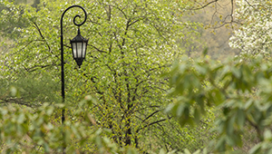 One of Wellesley's iconic lampposts amid campus greenery