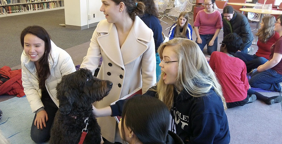 students gather raound Portuguese water dog