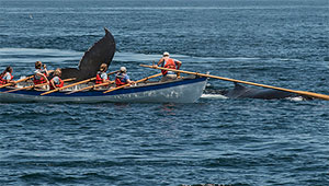 whale breaches near whaling rowboat