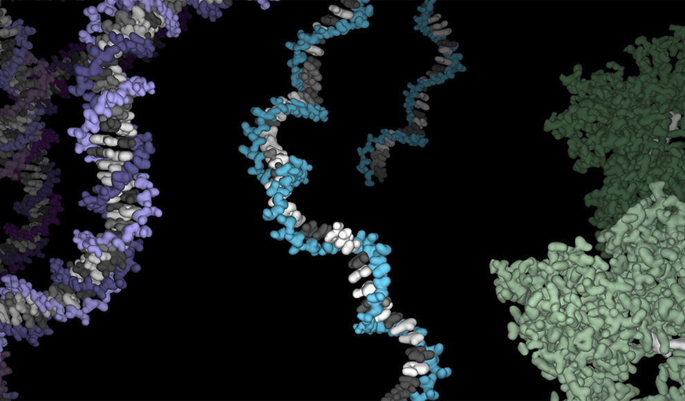 An illustration of DNA, RNA and protein