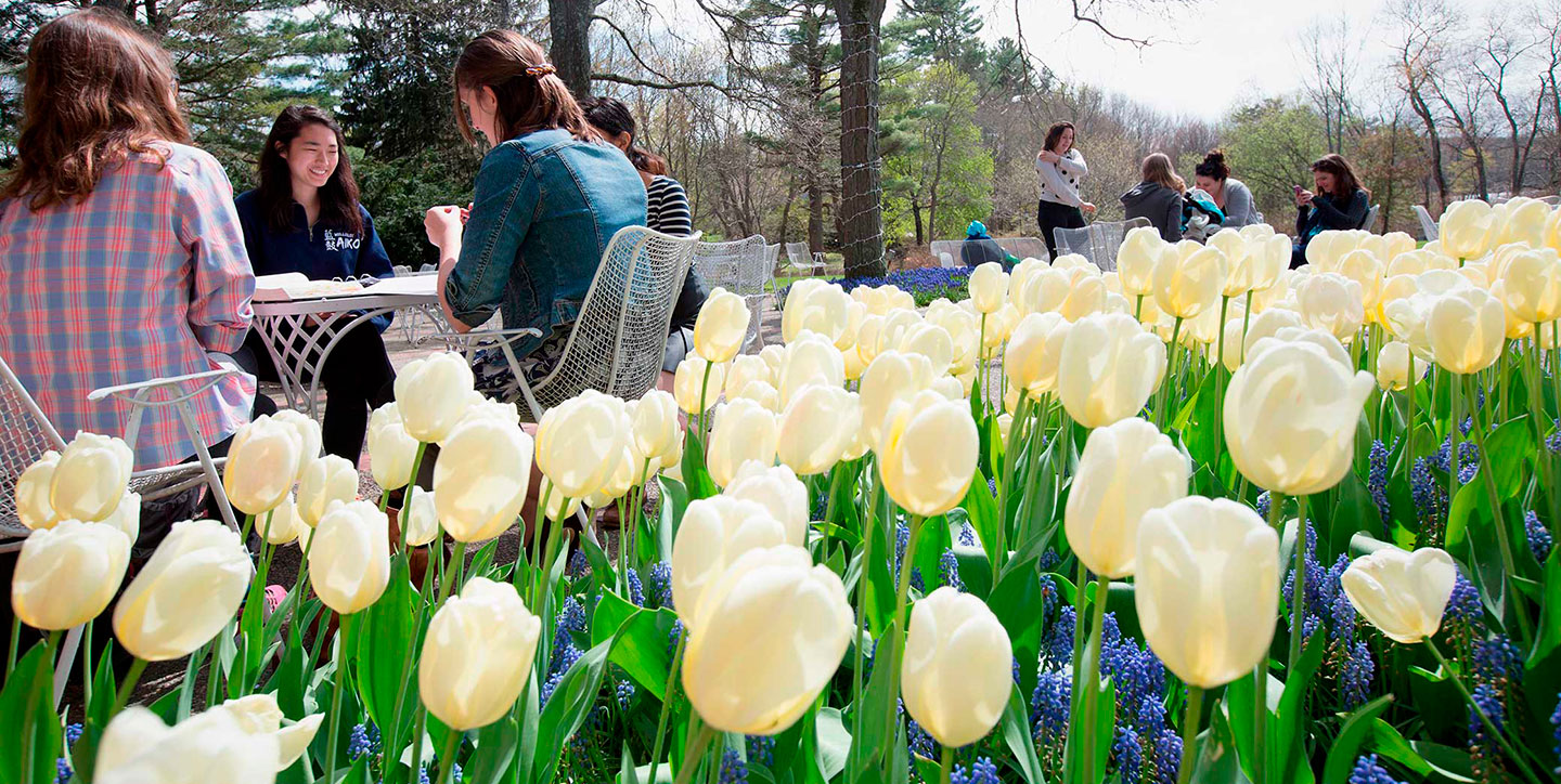 yellow tulips in the foreground with students studying outside in the background