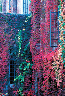 ivy-covered Founders Hall