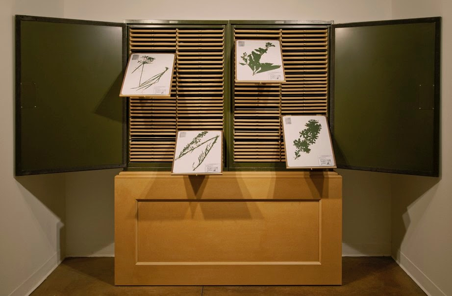 sculptural armoire with plant drawings art installation by Jenny Yurshansky