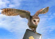 Owl in flight carrying a book