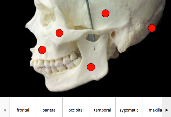 Example of drag-and-drop skeletal feature identification