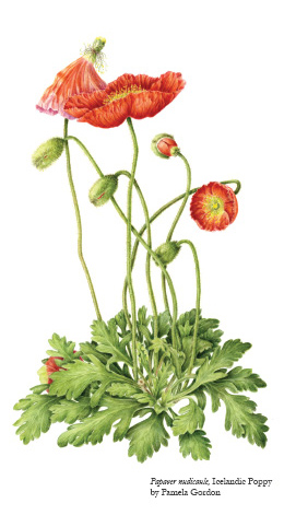 Certificate In Botanical Art Illustration Wellesley College