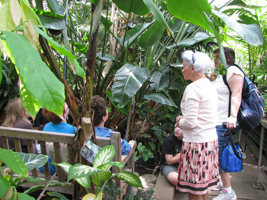 a volunteer giving a greenhouse tour