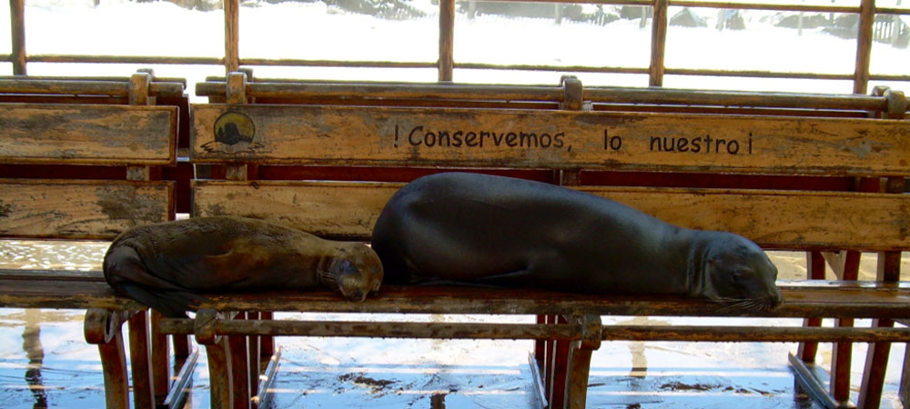 Sea lions lay on bench at beach