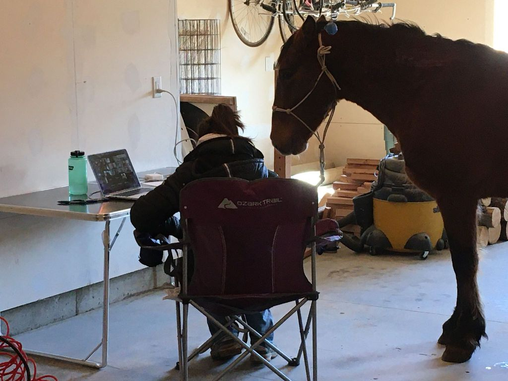 Emma Miller '20 and her horse Mustang at a remote class in Spring 2020