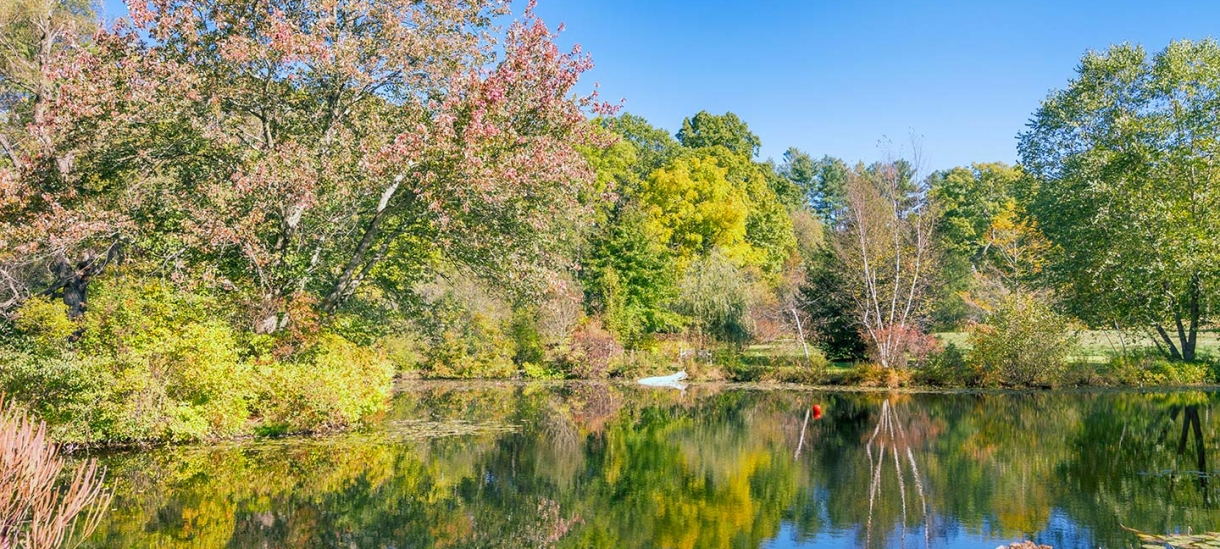 Paramecium Pond