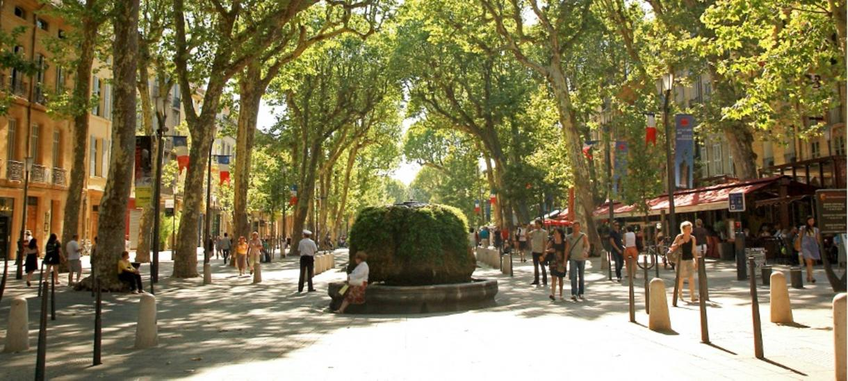 A wide, cobblestone street surrounded by tall green trees