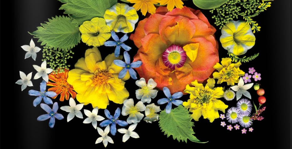 flowers against black background