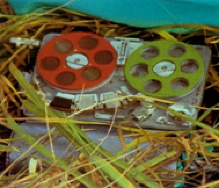 Steve McQueen, film still from Prey, 1999.
