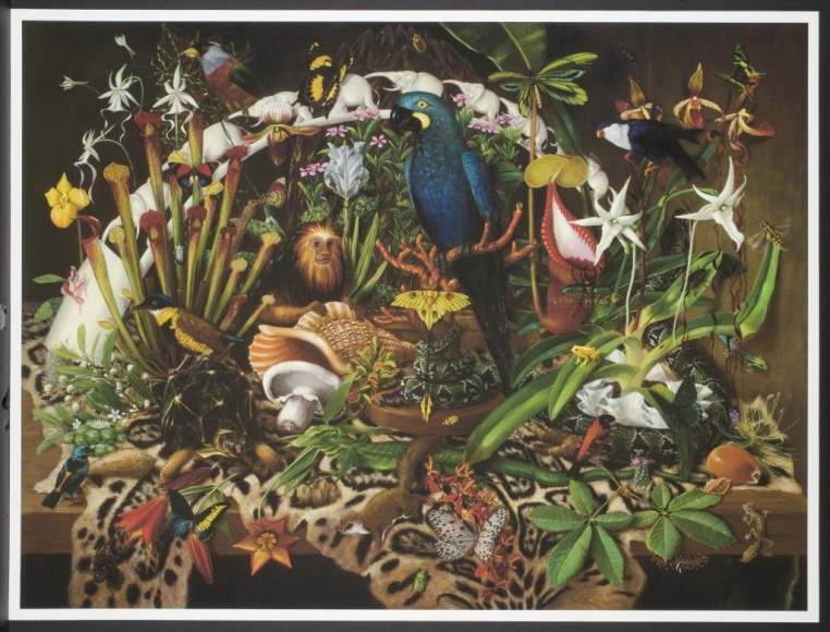 Isabella Kirkland, Trade from the portfolio Taxa, 2008, inkjet print, The Nancy Gray Sherrill, Class of 1954, Collection, 2010.42.4
