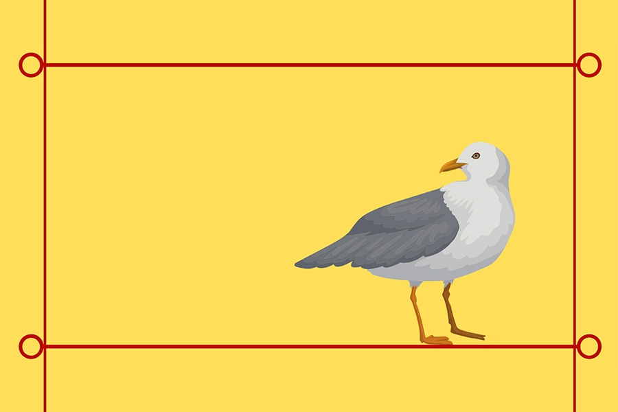 illustration of a seagull against a yellow background