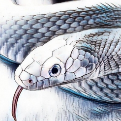 Image of white snake