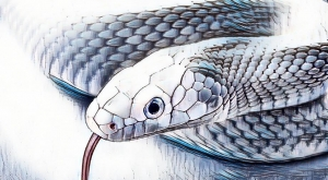 Image of white snake