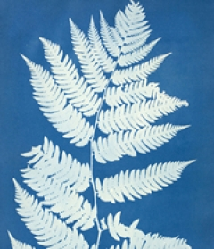 Anna Atkins, Aspidium Goldianum, ca. 1850. Cyanotype, 14 x 9 3/4 in. Museum purchase, The Linda Wyatt Gruber (Class of 1966) Photography Fund 2005, 2005.130