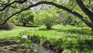 brook under arching branch in Wellesley Botanic Garden