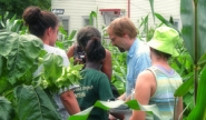 Dan Brabander works with students in an urban garden