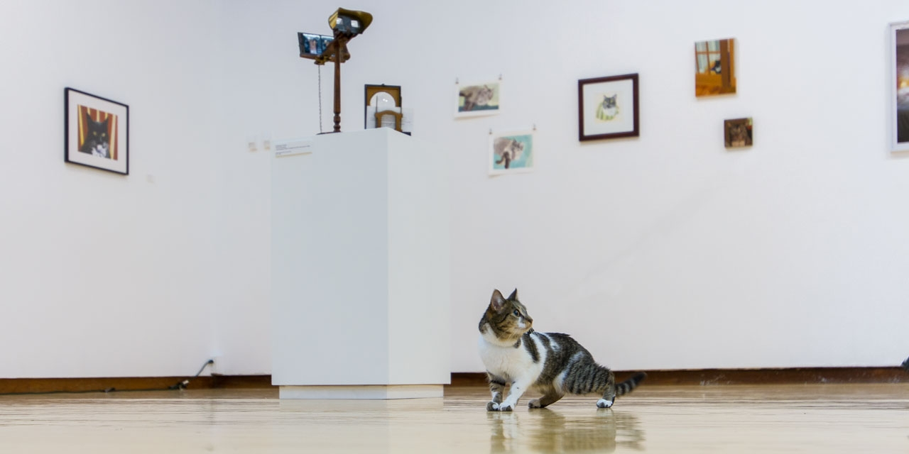 A cat views an art exhibition about cats
