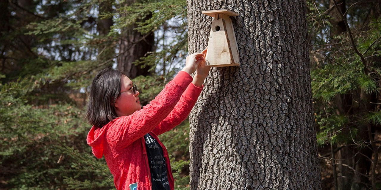 Miraculous Wellesley Students Build Birdhouses From Recycled Pallets Download Free Architecture Designs Scobabritishbridgeorg