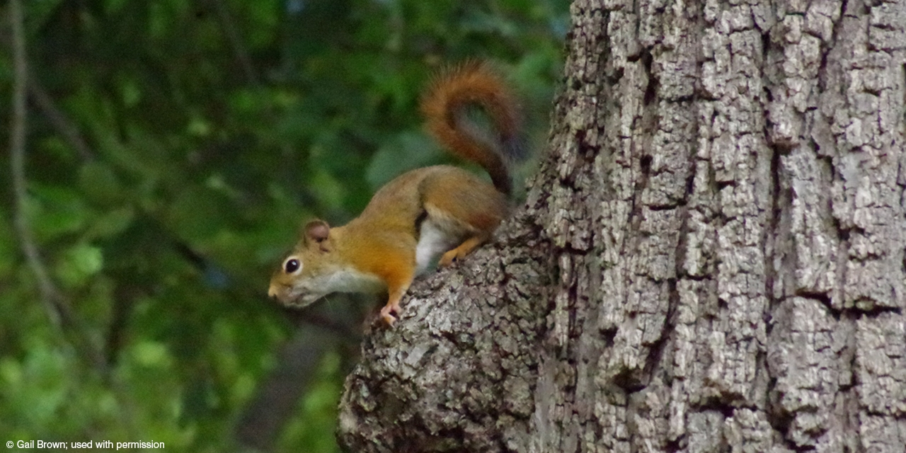 A squirrel surveys the scene from above.