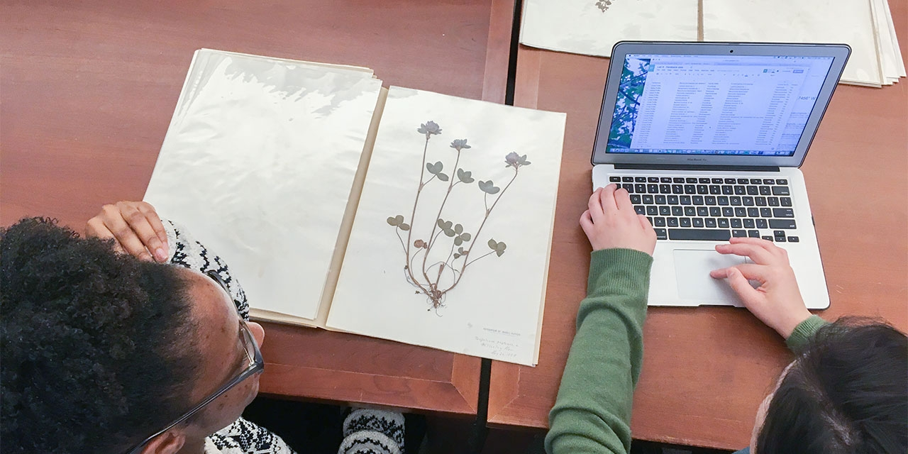 students study plants from Wellesley's herbarium in the archives
