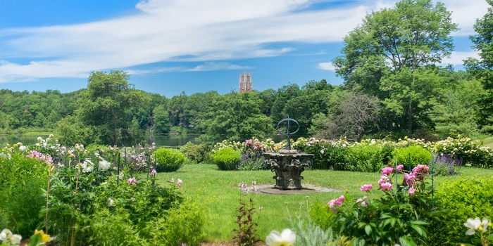 Beyond a garden of roses, a view of Galen Stone Tower