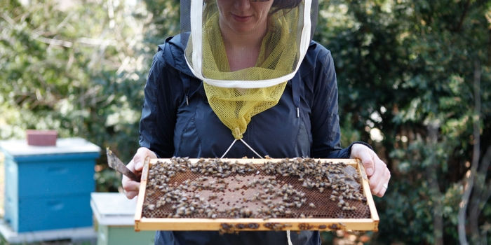 A professor holds a tray of bees outside.