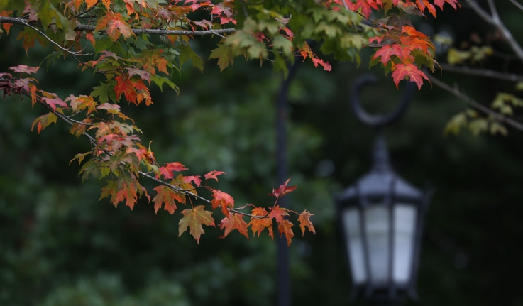 A Wellesley lamp post surrounded by fall leaves.