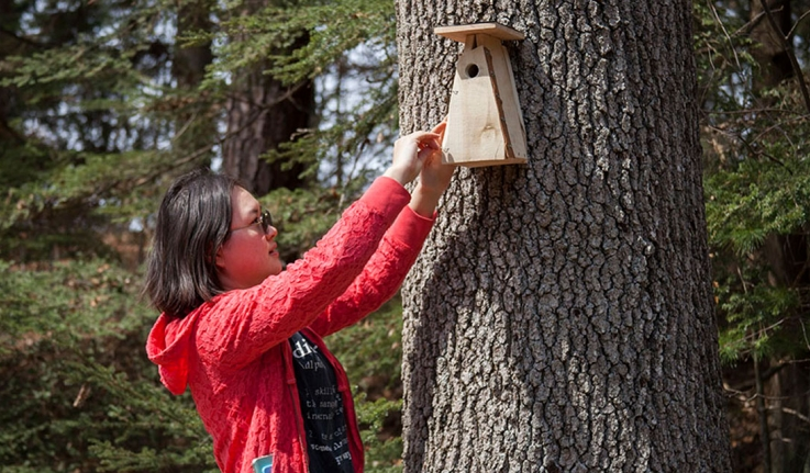 A student places a wooden birdhouse on a campus tree.