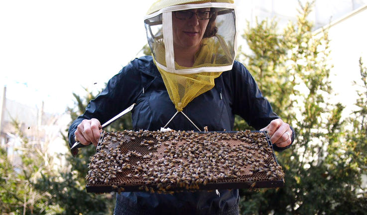Heather Mattila examines a group of bees.