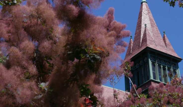 An image of the purple roof of Houghton Chapel, framed by a purple plant.