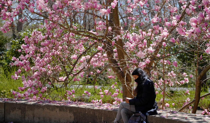A student sits under a tree with pink flowers and writes in her notebook.