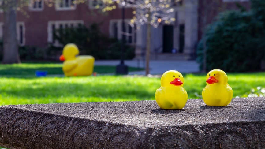 Outside of Green Hall, two ducks find some shade under a budding tree.