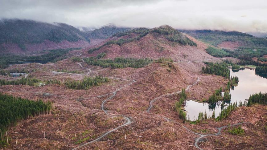 a view of deforested area in the Tongas