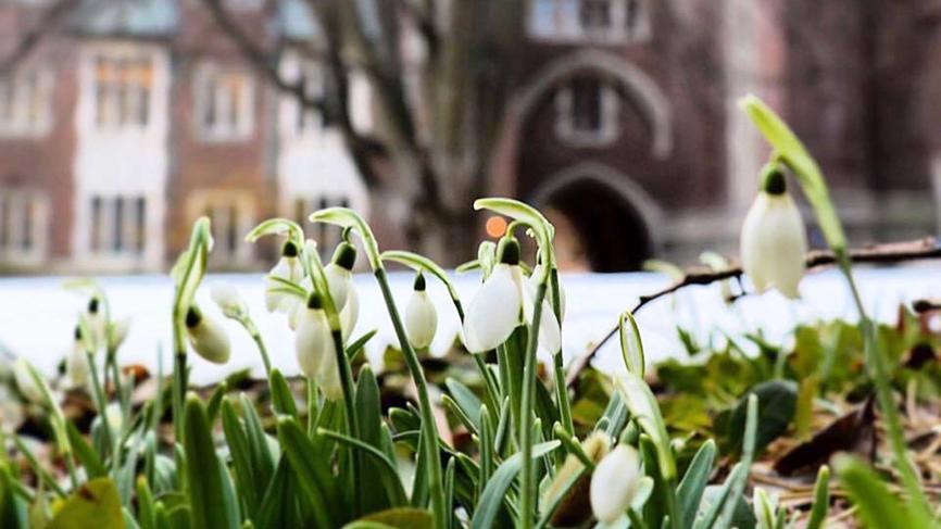 Snowdrops near Green Hall