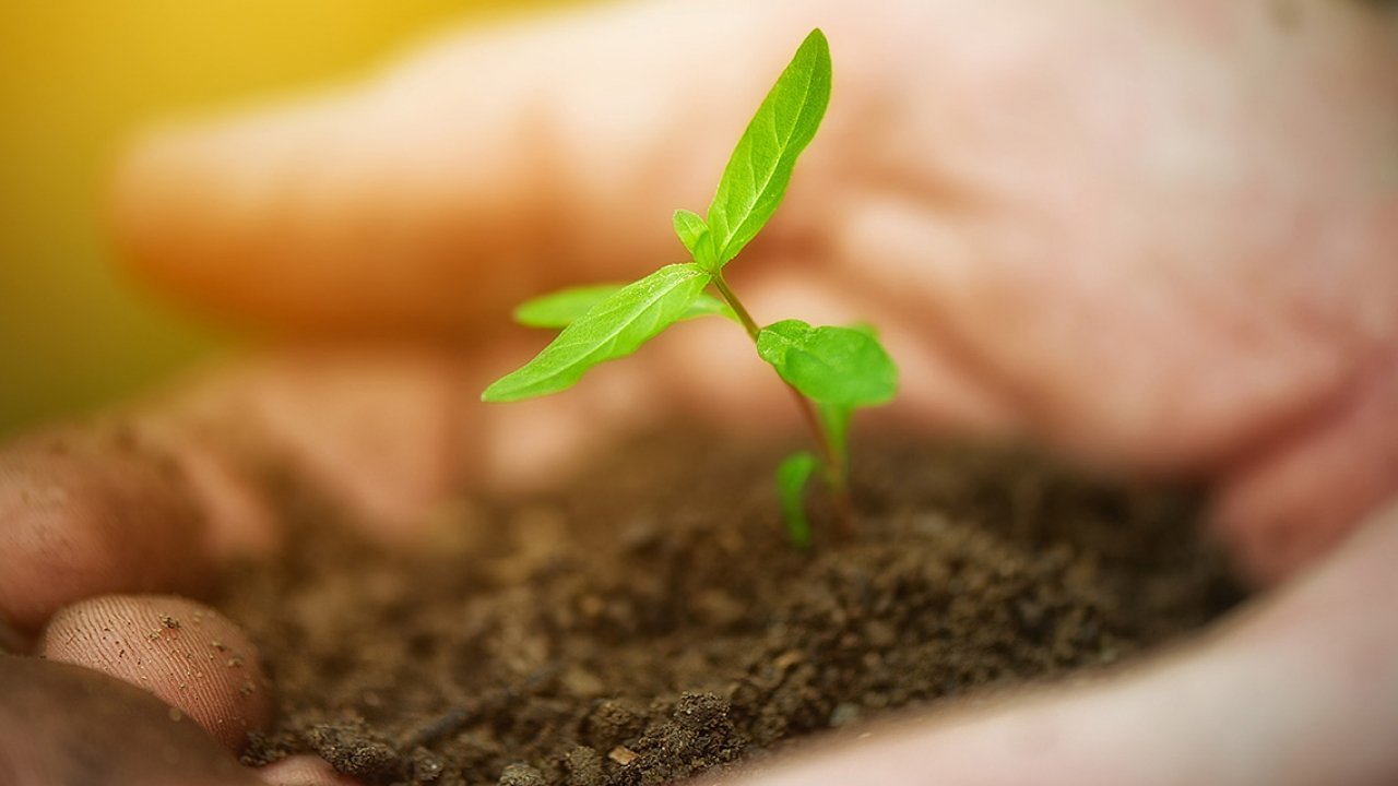 Two hands hold soil and a single sprouting plant.