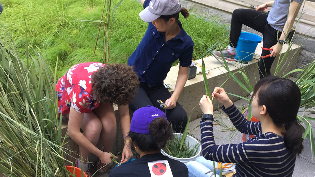 Students pull invasive plants out of the ground and put them in piles for later use.