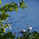Lake Waban <br> Webcam
