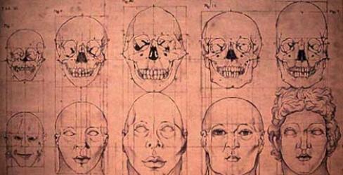 drawings of various heads