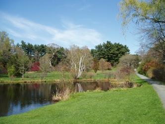 Paramecium Pond   Alexandra Botanic Garden