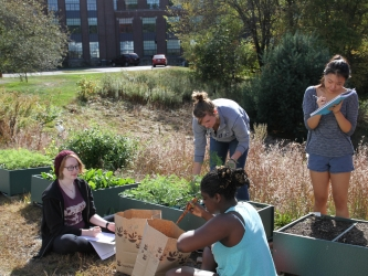 Students harvest carrots and spinach