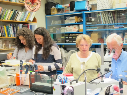 Dr. Beltz in her lab with colleagues.