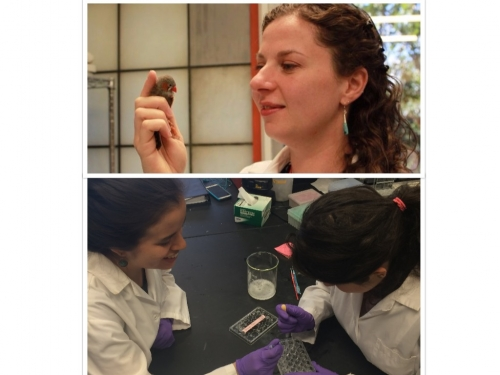 Dr. Gobes with a zebra finch; students conducting research in the lab.